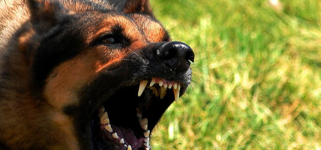 dog bite, dot attack, safety, personal injury