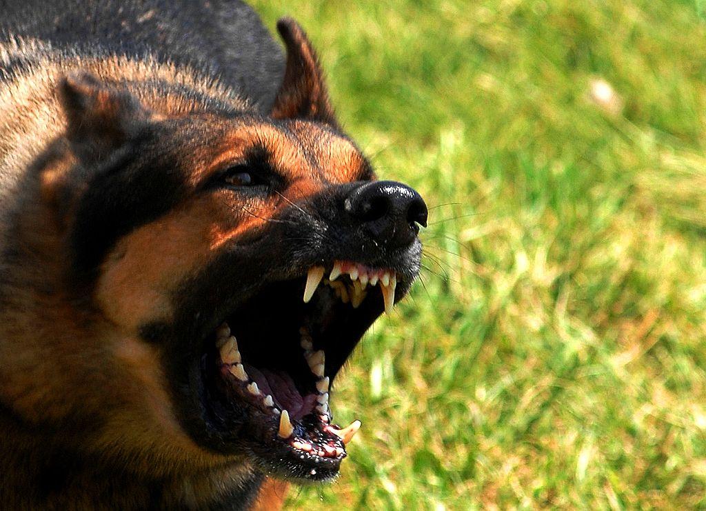 angrydog1