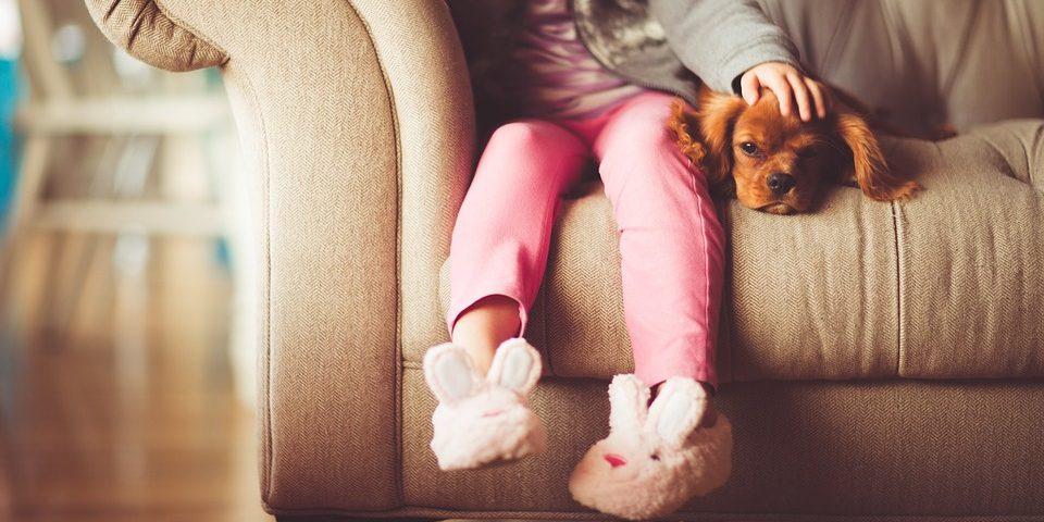 puppy pet safety dog bite