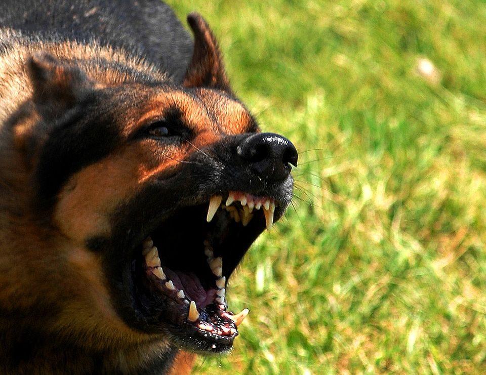 dog bite incident dog attack