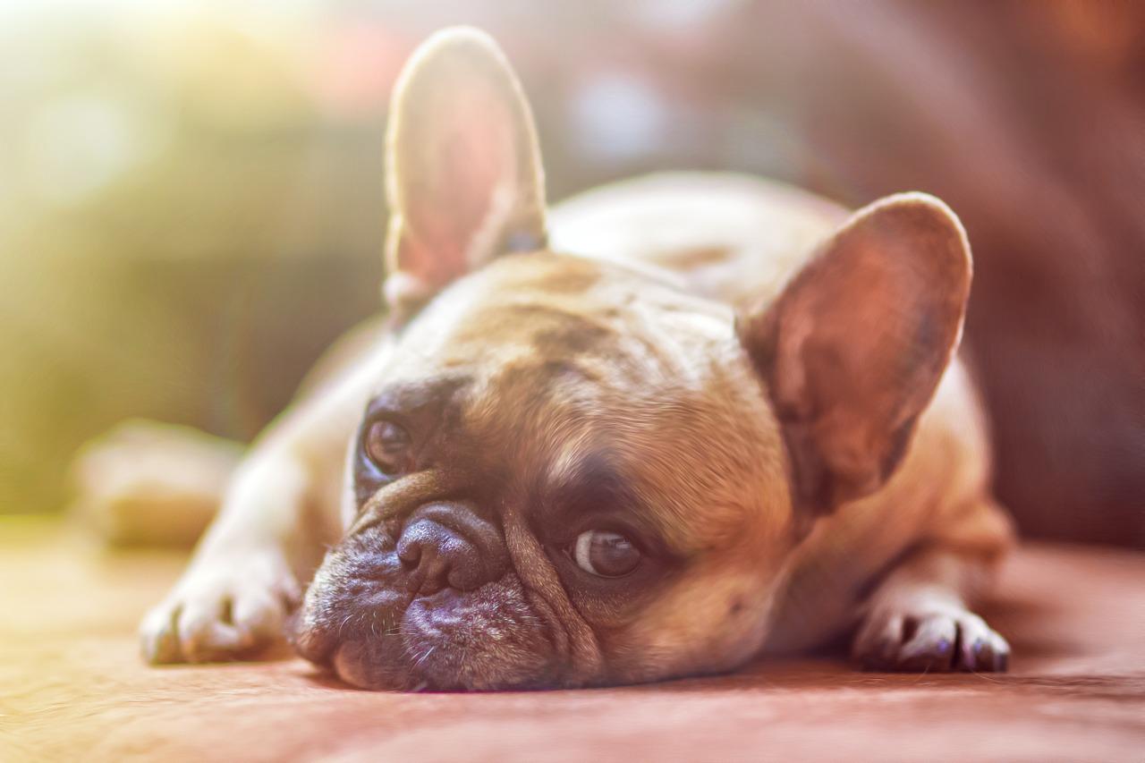 dog pet food recall contamination