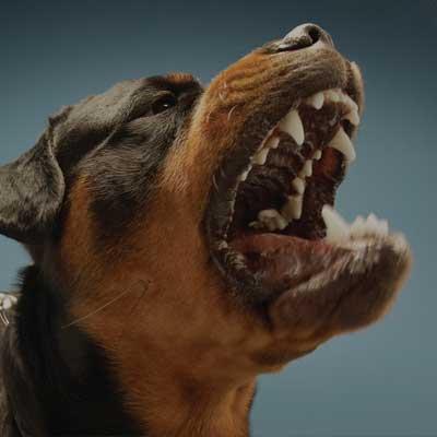 02-dog-attack-sm