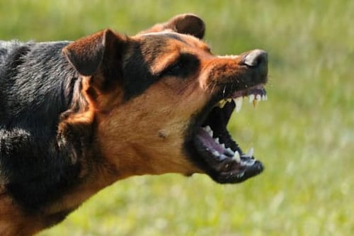Washington Dog Bite Injury Lawyers